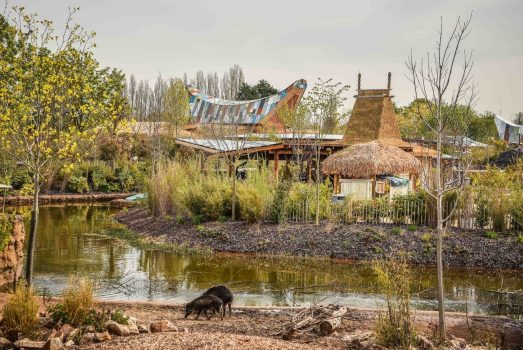 Day Trip to Chester Zoo